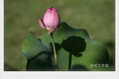 _MG_0082_mh1467618975380